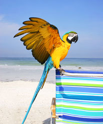 parrot flying with a towel