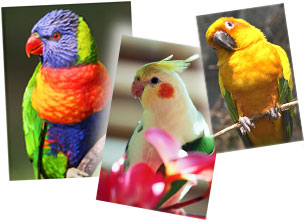 Three parrot pictures