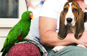 dog with a parrot